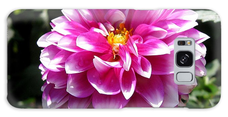 Dahlia Galaxy S8 Case featuring the photograph Dahlia Named Brian Ray by J McCombie