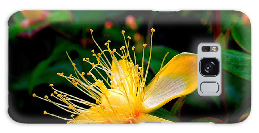 Flower Galaxy S8 Case featuring the photograph Dancing Stamen by Renee Trenholm