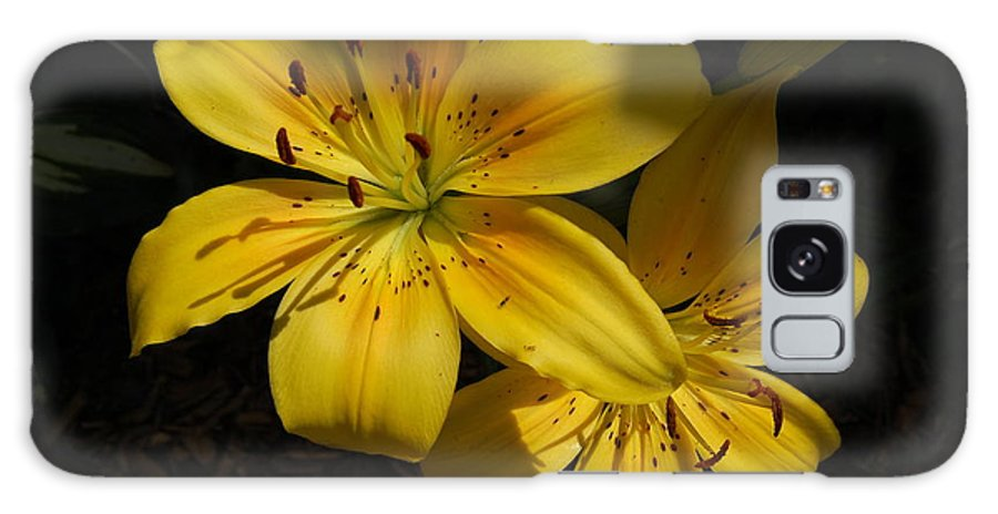 Yellow Lilies Galaxy S8 Case featuring the photograph Day Lily by Mim White