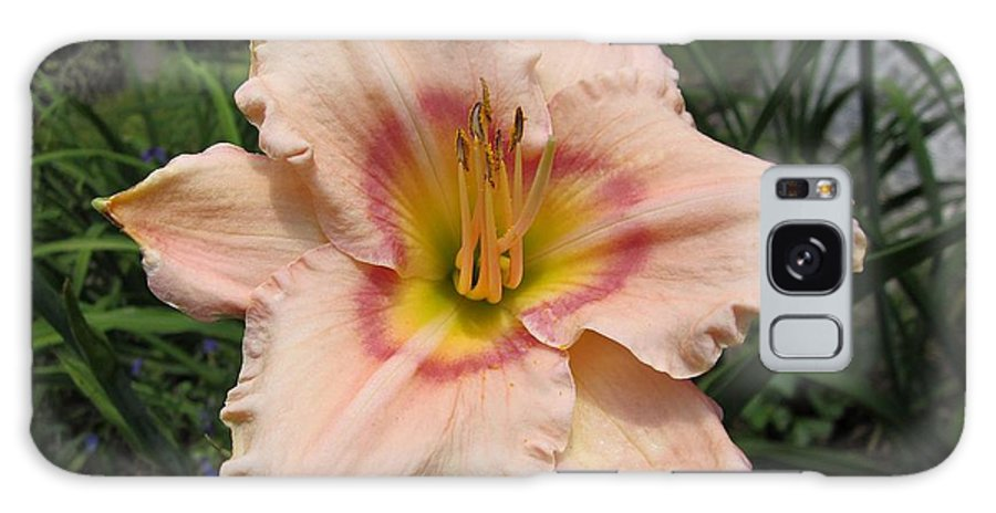 Eye Declare Daylily Galaxy S8 Case featuring the photograph Daylily by MTBobbins Photography