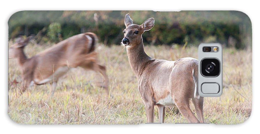 Deer Galaxy S8 Case featuring the photograph Deer At Paynes Prairie by Paul Rebmann
