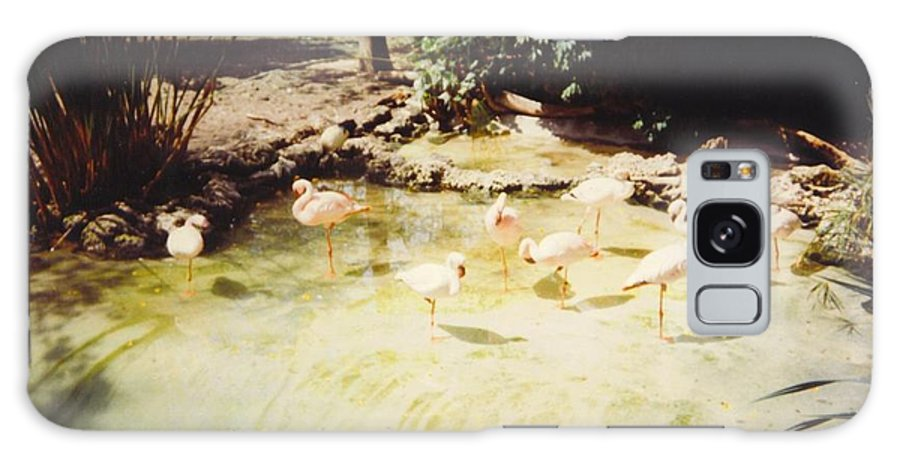 Miami Zoo Galaxy S8 Case featuring the photograph Flamingos by Robert Floyd