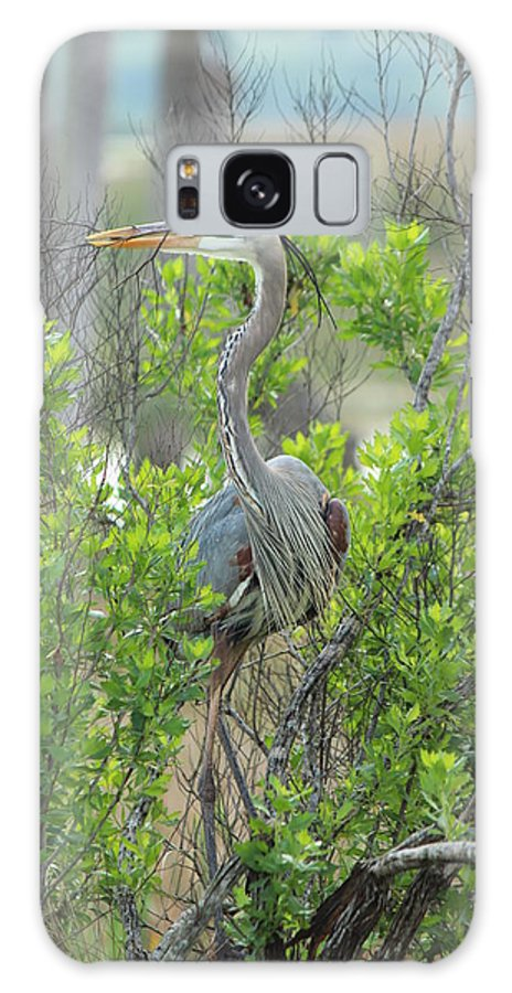 Great Blue Heron Galaxy S8 Case featuring the photograph Gathering by Peggy Burley
