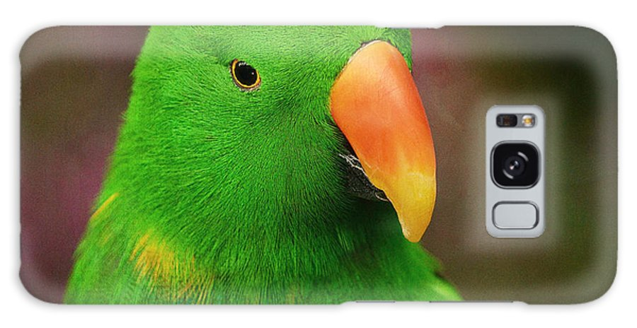 Male Eclectus Parrot Galaxy S8 Case featuring the photograph Gaze by Fraida Gutovich