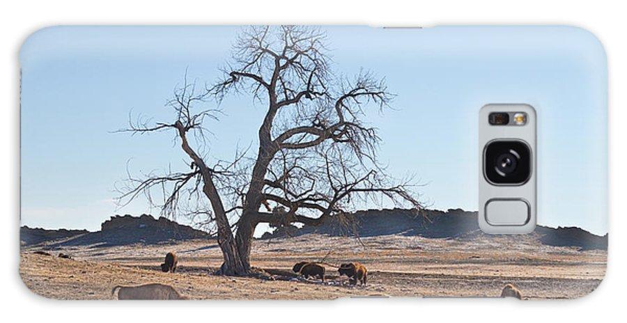 Buffalo Galaxy S8 Case featuring the photograph Give Me A Home Where The Buffalo Roam by James BO Insogna