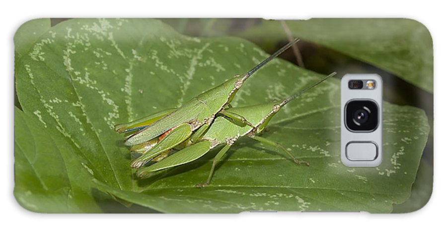 Grasshopper Galaxy S8 Case featuring the photograph Grasshopper Mating On Grass Leaf by Rudra Narayan Mitra