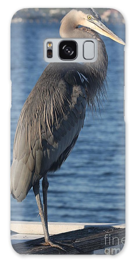 Heron Galaxy S8 Case featuring the photograph Great Blue Heron by Christiane Schulze Art And Photography
