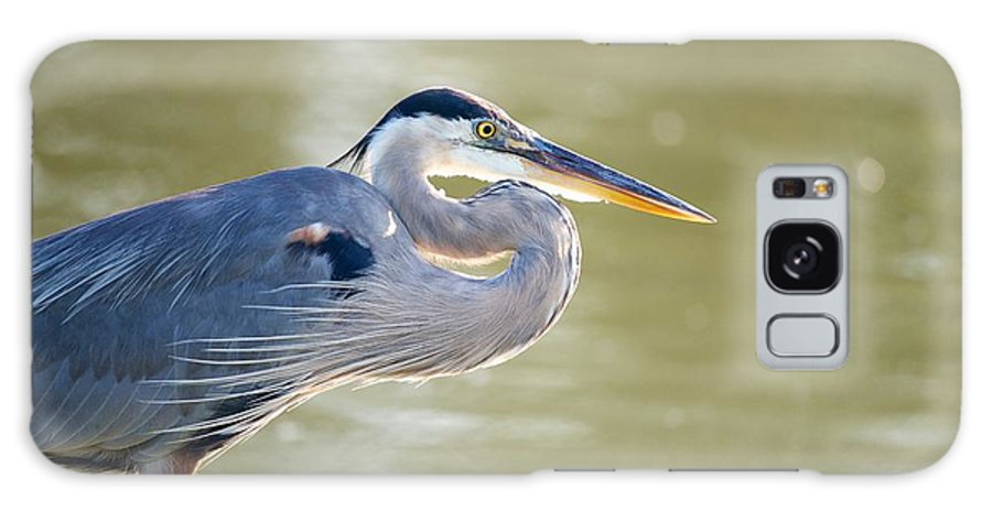 Miguel Galaxy S8 Case featuring the photograph Great Blue Heron by Miguel Celis