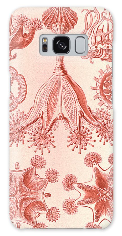 Illustration Galaxy S8 Case featuring the drawing Illustration Shows Stalked Jellyfishes. Stauromedusae by Artokoloro