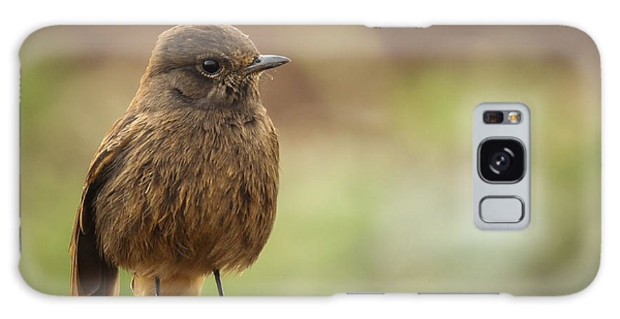 Birds Galaxy S8 Case featuring the photograph Indian Robin Female by Vijay Sonar