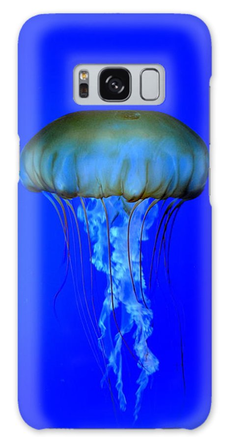 Aquarium Galaxy S8 Case featuring the photograph Jelly Fish by Nathan Abbott