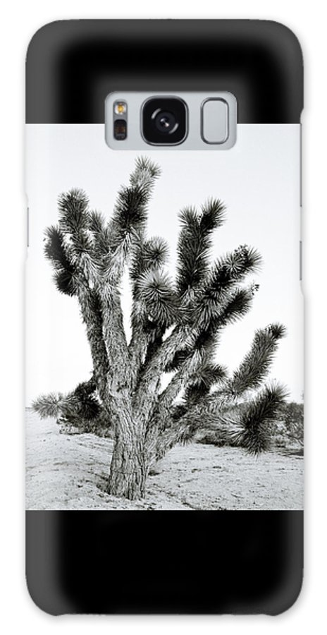 Nature Galaxy S8 Case featuring the photograph Joshua Tree by Shaun Higson