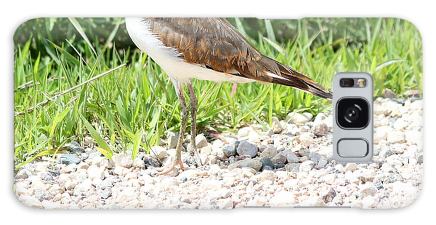 Killdeer Galaxy S8 Case featuring the photograph Killdeer by Lori Tordsen