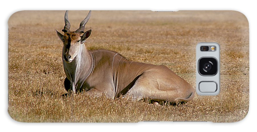 Eland Antelope Galaxy S8 Case featuring the photograph Eland Antelope In Kenya by Carl Purcell