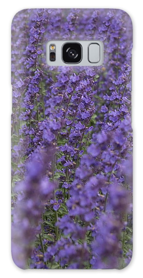 Lavender Galaxy S8 Case featuring the photograph Lavender by Ronald Jansen