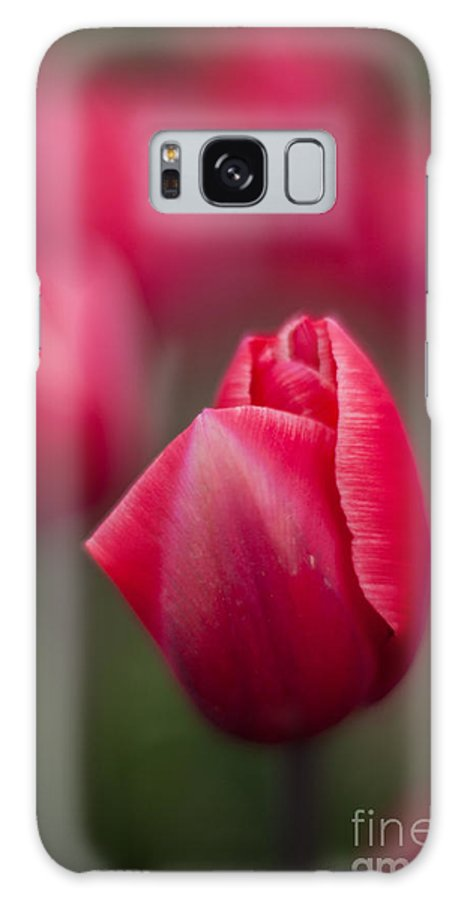 Tulip Galaxy S8 Case featuring the photograph Layers Of Beauty by Mike Reid