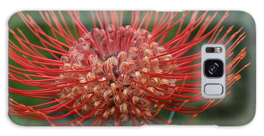 Aloha Galaxy S8 Case featuring the photograph Leucospermum - Pincushion Protea - Tropical Sunburst Protea Flower Hawaii by Sharon Mau