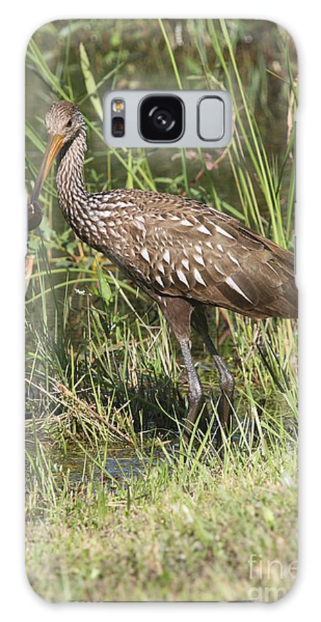 Limpkin Galaxy S8 Case featuring the photograph Limpkin In The Glades by Christiane Schulze Art And Photography
