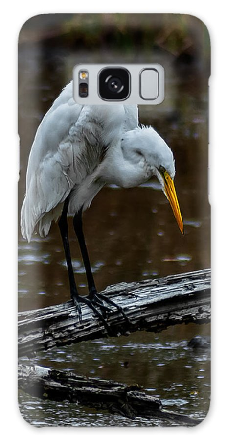 Great Egret Galaxy S8 Case featuring the photograph Looking For Dinner by Charles Moore