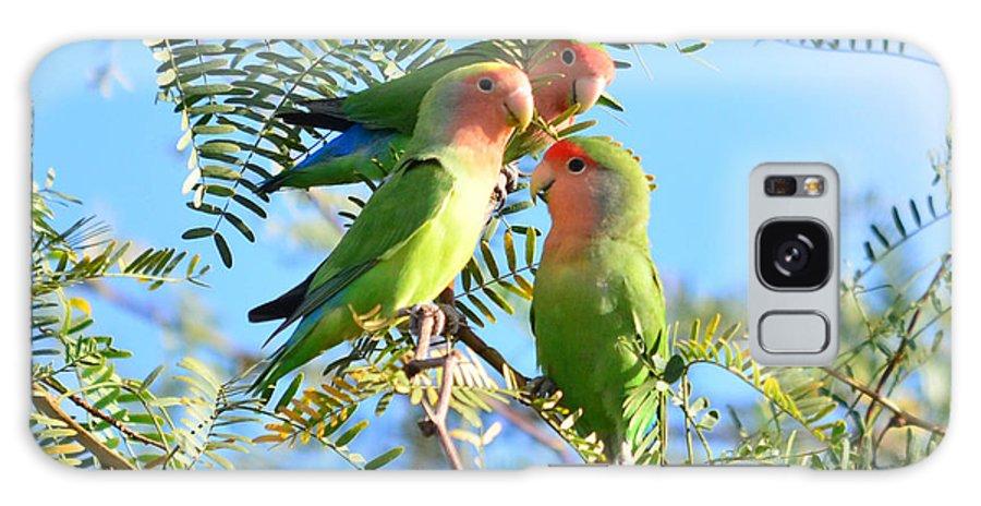 African Peach-face Lovebirds Nature Birds Wildlife Arizon Galaxy S8 Case featuring the photograph Lovebirds by Eduardo Dinero