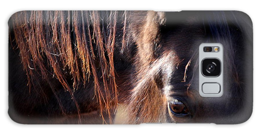 Horses Galaxy S8 Case featuring the photograph Loved by Rabiah Seminole