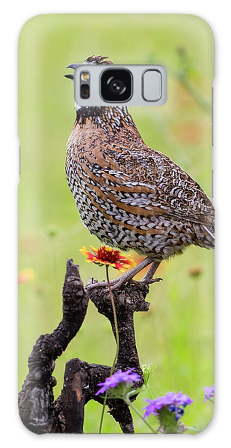 Bird Galaxy S8 Case featuring the photograph Northern Bobwhite, Colinus Virgianus by Larry Ditto