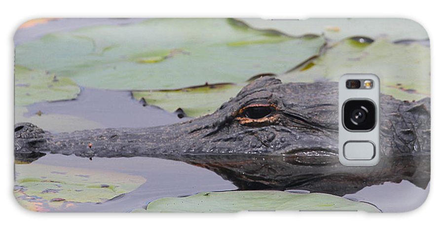 Gator Galaxy S8 Case featuring the photograph Okefenokee Gator by Cathy Lindsey