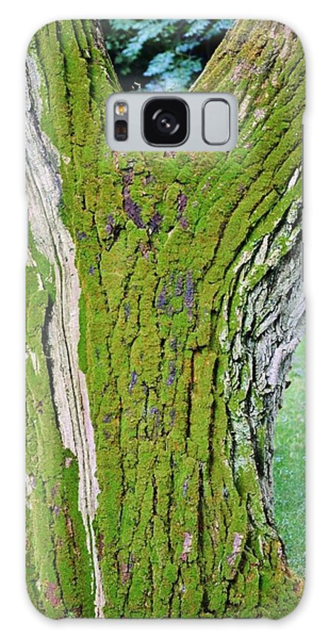 Close Up; Old; Tree; Stem; Moss; Green; Bark; Rain; Garden; Background; Wind; Decorative; Detail; View; Weather; Galaxy S8 Case featuring the photograph Old Tree by Werner Lehmann