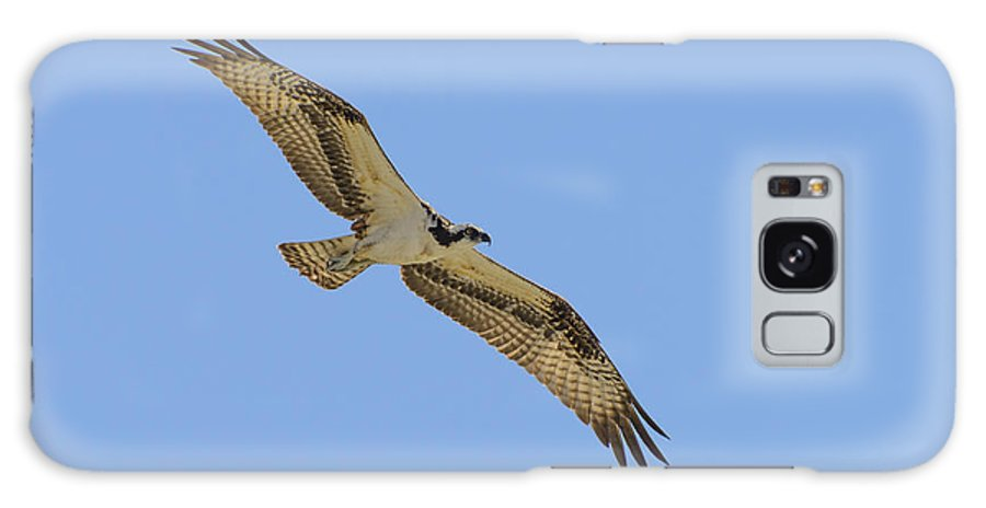 Accipitridae Galaxy S8 Case featuring the photograph Osprey In Flight by Steve Samples