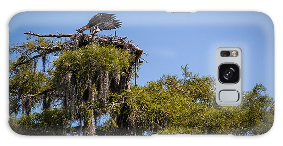 Osprey Galaxy Case featuring the photograph Osprey With Wings Forward by Gregory Daley MPSA
