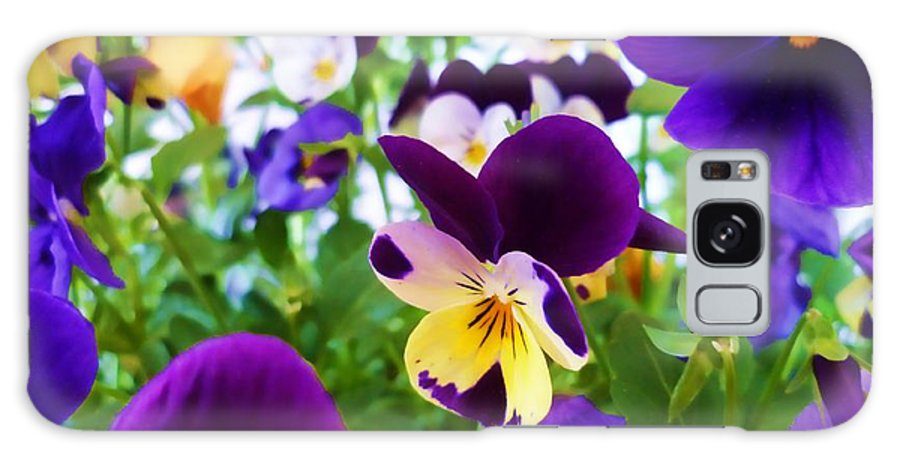 Pansy Galaxy S8 Case featuring the photograph Pansies by Sharon Lisa Clarke
