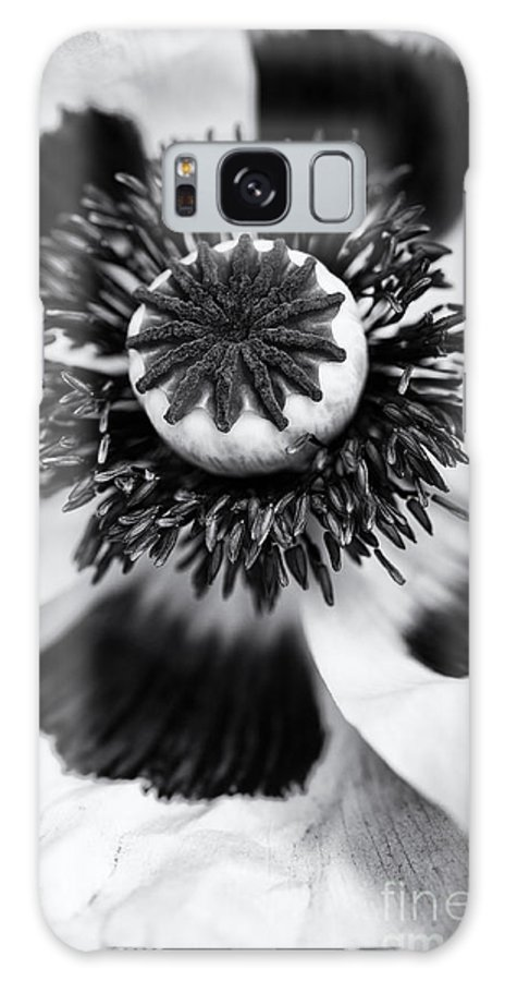 Papaver Orientale Galaxy S8 Case featuring the photograph Papaver Orientale Perrys White by Tim Gainey