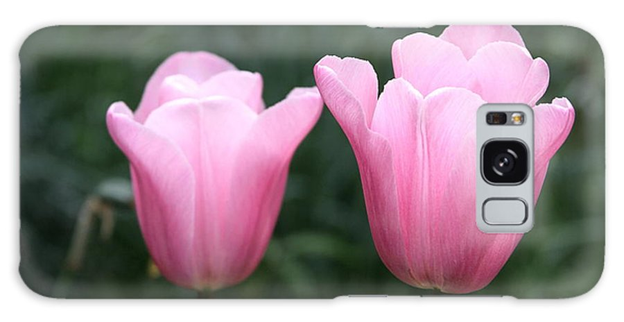 Parrot Galaxy S8 Case featuring the photograph Parrot Tulip Mystic Mistress by Kevin F Cook