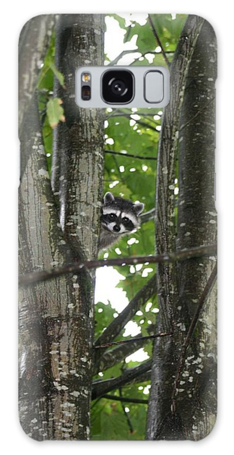 Raccoon Galaxy S8 Case featuring the photograph Peeking At Me by Myrna Walsh