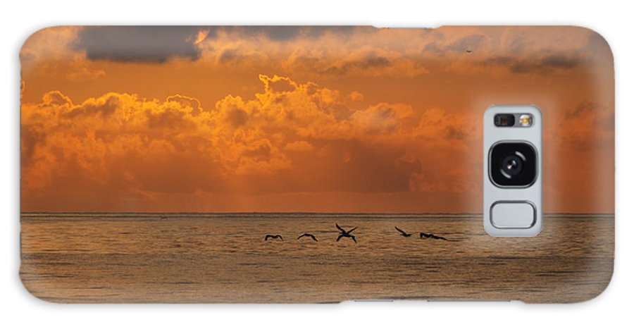 Pelican Galaxy S8 Case featuring the photograph Pelican Sunrise by Island Sunrise and Sunsets Pieter Jordaan