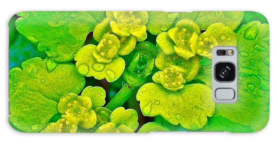 Petty Spurge In Peterhof Galaxy S8 Case featuring the photograph Petty Spurge In Peterhof-russia by Ruth Hager