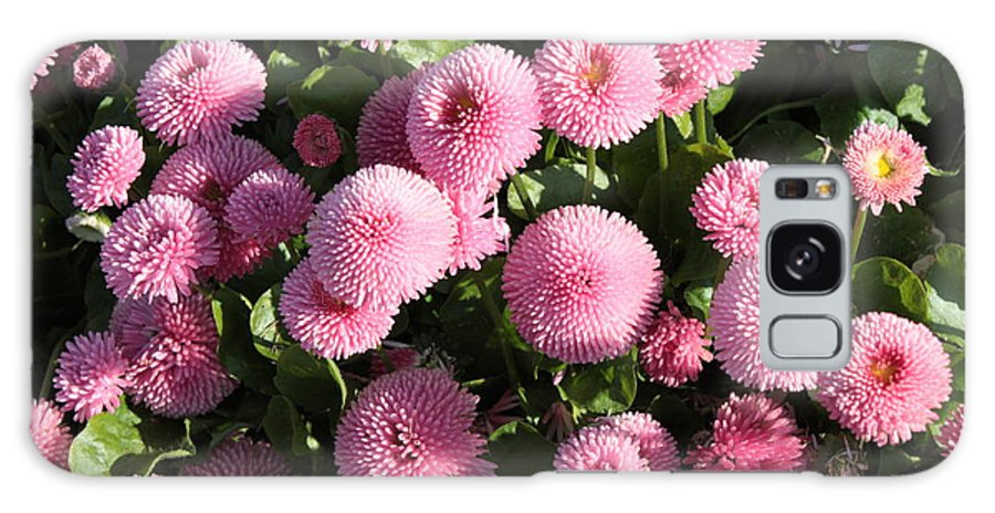 Button Pom Flowers Galaxy S8 Case featuring the photograph Pink Button Pom Flowers by Carol Groenen