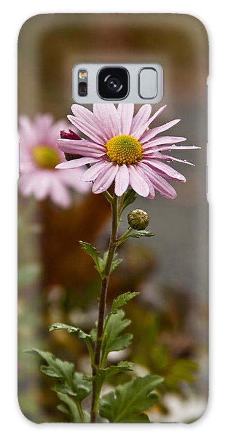 Pink Daisies Photographs Galaxy S8 Case featuring the photograph Pink Daisies by Dennis Coates
