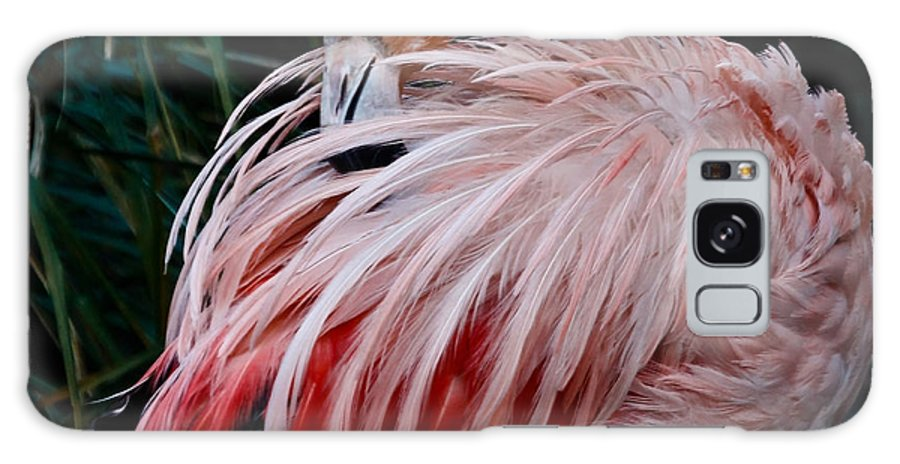Pink Flamingo Galaxy S8 Case featuring the photograph Pink Flamingo by Athena Mckinzie