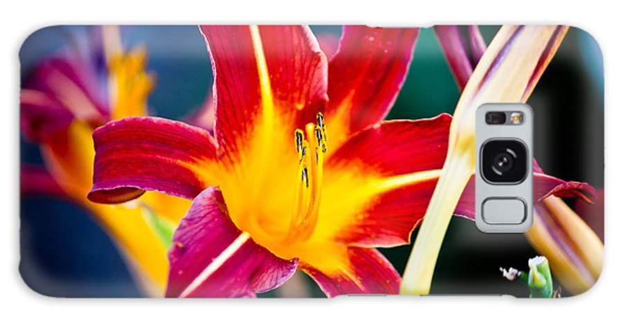 Nature Galaxy S8 Case featuring the photograph Red And Yellow Lily by Ms Judi