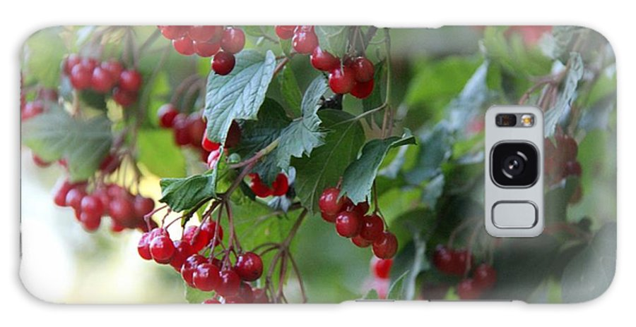 Bush Galaxy S8 Case featuring the photograph Red Berries by Yumi Johnson