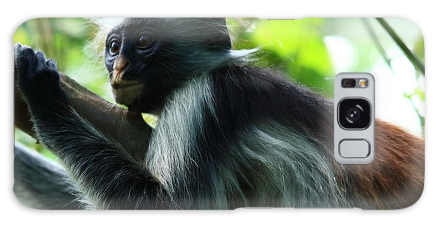 Red Colobus Monkey Galaxy S8 Case featuring the photograph Red Colobus Monkey by Aidan Moran