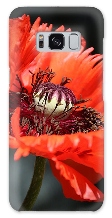 Rochester Galaxy S8 Case featuring the photograph Red Orange Poppy by Meegan Streeter
