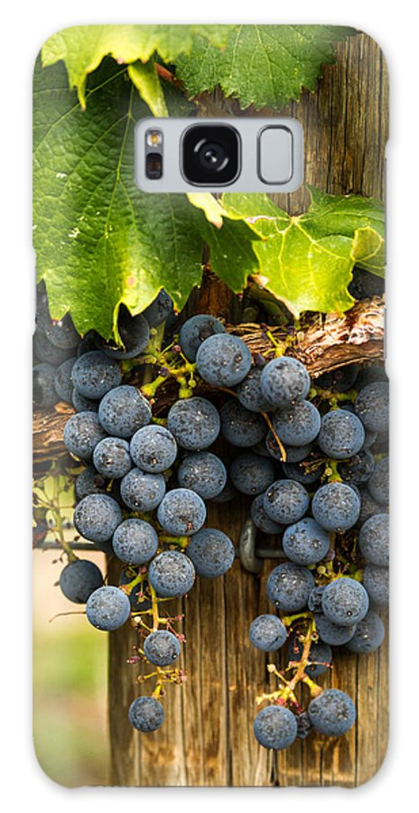 Colorado Vineyard Galaxy S8 Case featuring the photograph Red Wine Grapes by Teri Virbickis