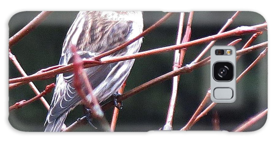 Redpoll Galaxy S8 Case featuring the photograph Redpoll by MTBobbins Photography