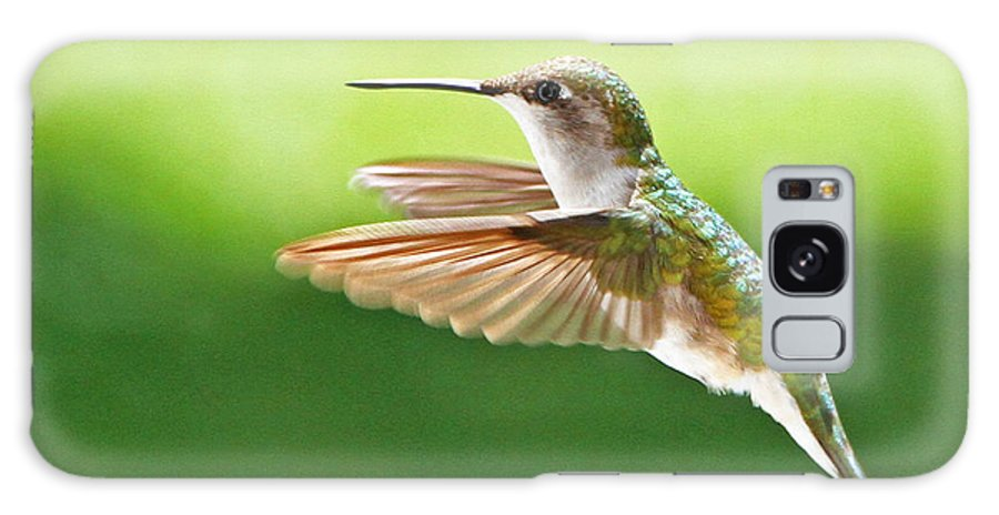 Ruby-throated Hummingbird Galaxy S8 Case featuring the photograph Ruby-throated Hummingbird by Jaron Wood