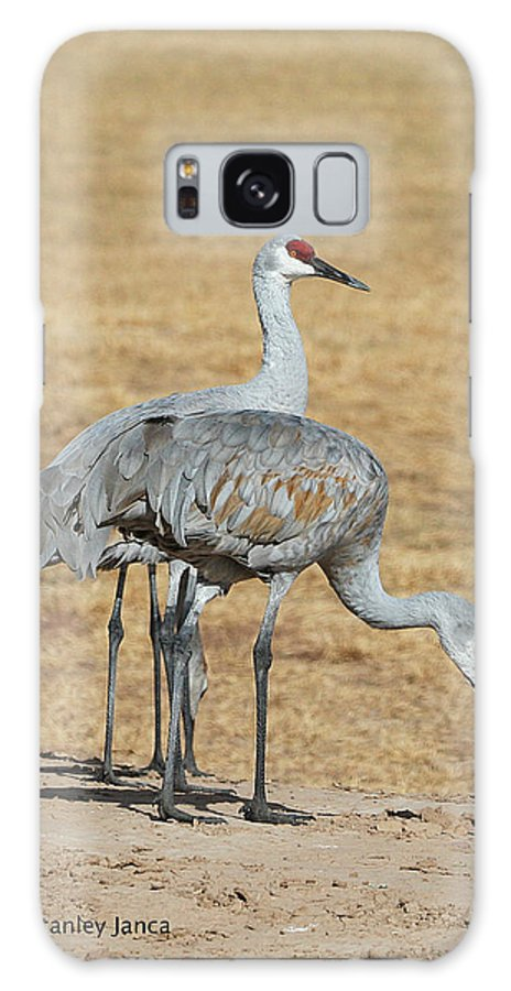 Sand Hill Cranes Eating Galaxy S8 Case featuring the photograph Sand Hill Cranes Eating by Tom Janca