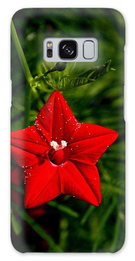Scarlet Morning Glory Galaxy S8 Case featuring the photograph Scarlet Morning Glory by Ramabhadran Thirupattur