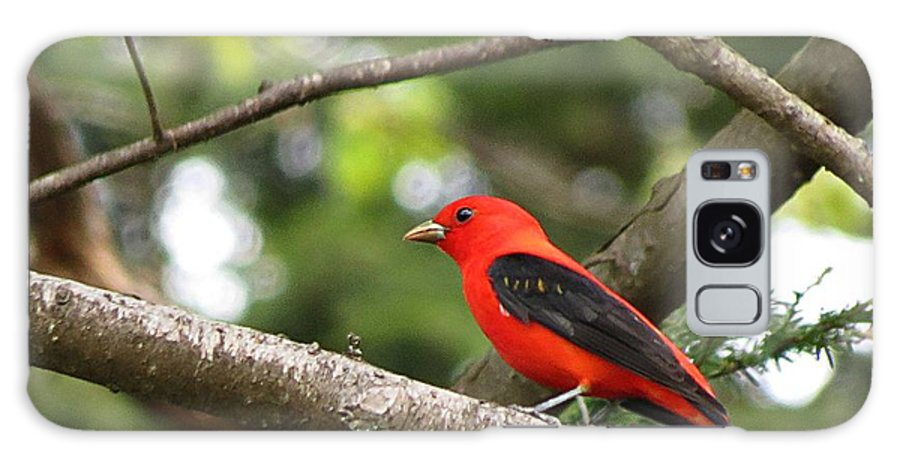 Scarlet Tanager Galaxy S8 Case featuring the photograph Scarlet Tanager by MTBobbins Photography