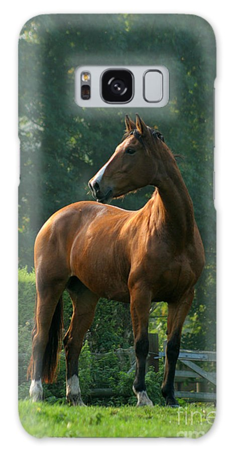 Horse Galaxy S8 Case featuring the photograph Sentinel by Angel Ciesniarska